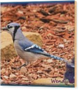 Bluejay Profile Wood Print