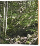 Bluestone State Park Mountain Stream West Virginia Wood Print