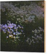 Bluets In Momentary Light Wood Print