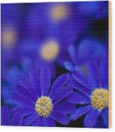 Bluey Gerbera Wood Print