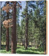 Bluff Lake Ca Fern Forest 3 Wood Print