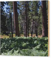 Bluff Lake Ca Fern Forest 4 Wood Print