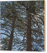 Bluff Lake Ca Through The Trees 3 Wood Print