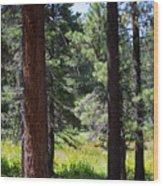 Bluff Lake Ca Through The Trees 7 Wood Print