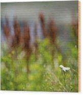 Bluff Lake Ca Wild Flowers 1 Wood Print