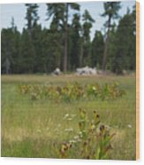 Bluff Lake Ca Wild Flowers 4 Wood Print
