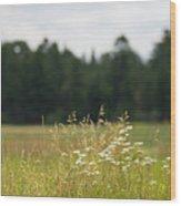 Bluff Lake Ca Wild Flowers 5 Wood Print