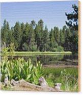 Bluff Lake Foliage 5 Wood Print
