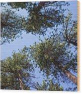 Bluff Lake Forest 2 Wood Print