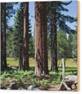 Bluff Lake Forest 3 Wood Print