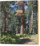 Bluff Lake Forest 6 Wood Print