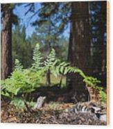 Bluff Lake Forest Foliage1 Wood Print