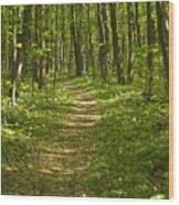 Bluff Trail Awenda Provincial Park Wood Print