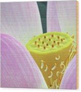 Blumen Des Wassers - Flowers Of The Water 06 Wood Print