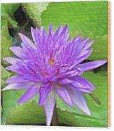 Blumen Des Wassers - Flowers Of The Water 17 Wood Print