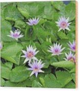 Blumen Des Wassers - Flowers Of The Water 22 Wood Print