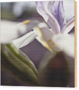 Blurred Iris Wood Print by Ray Laskowitz - Printscapes