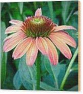 Blush Coneflower Wood Print