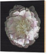 Blush Peony Open Wood Print