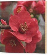 Blushing Blooms Wood Print