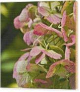 Blushing Hydrangea Wood Print