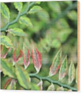 Blushing Leaves Wood Print