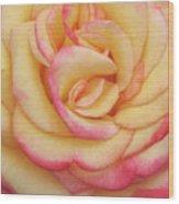 Blushing Yellow Rose Wood Print