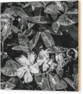 Bnw Bee  Wood Print