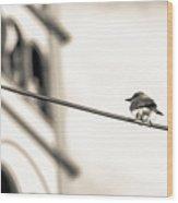 Bnw Bird - San Salvador I Wood Print
