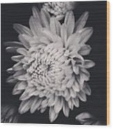 Bnw Flora Wood Print