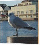 Boardwalk Seagull Wood Print