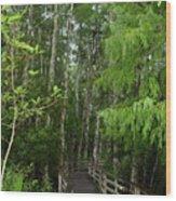 Boardwalk Through The Bald Cypress Strand Wood Print