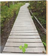 Boardwalk To Backguard Falls In British Columbia Wood Print