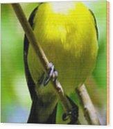 Boastful Bird Wood Print