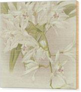 Boat Orchid  Cymbidium Wood Print
