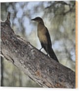 Boat - Tailed Grackle  Wood Print