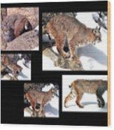 Bob Cat Wood Print
