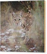Bob On The Prowl Wood Print