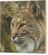 Bobcat Wood Print by Dick Wood