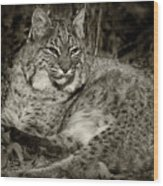 Bobcat In Black And White Wood Print