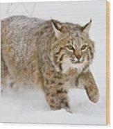 Bobcat In Snow Wood Print