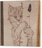 Bobcat Kitten Curiosity Wood Print