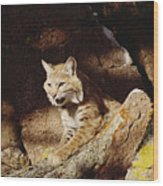 Bobcat Lynx Rufus Portrait On Rock Wood Print