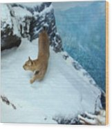 Bobcat On A Mountain Ledge Wood Print