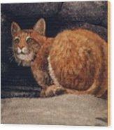 Bobcat On Ledge Wood Print