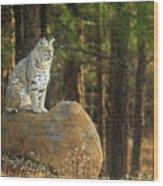 Bobcat Thoughts Wood Print