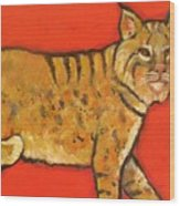Bobcat Watching Wood Print by Carol Suzanne Niebuhr