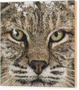 Bobcat Whiskers Wood Print