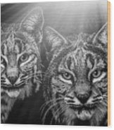Bobcats Wood Print