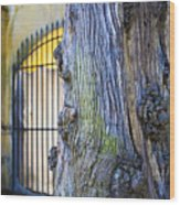Boboli Garden Ancient Tree Wood Print